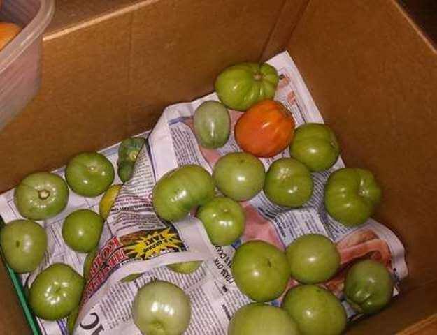 Хранение томатов в бумаге